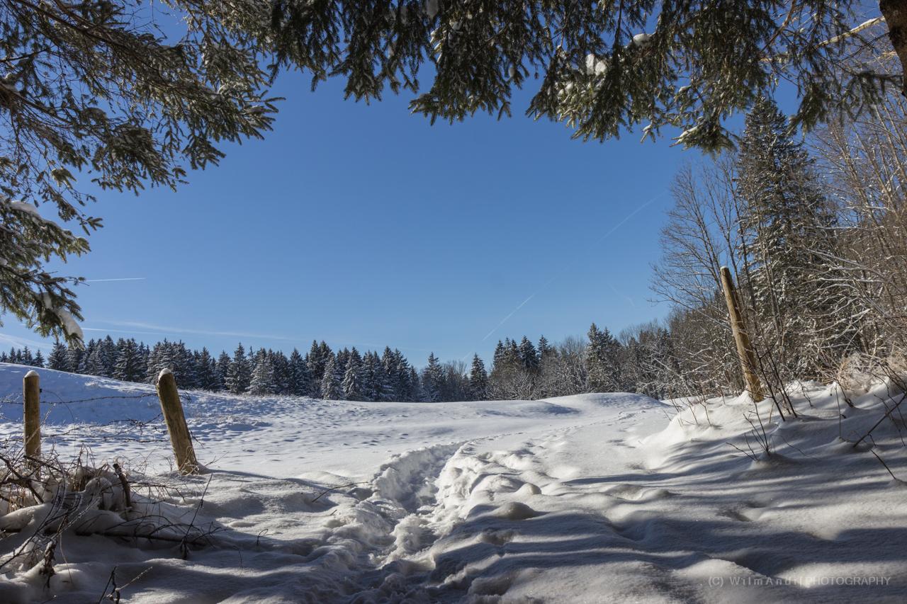 Blick aus dem Wald