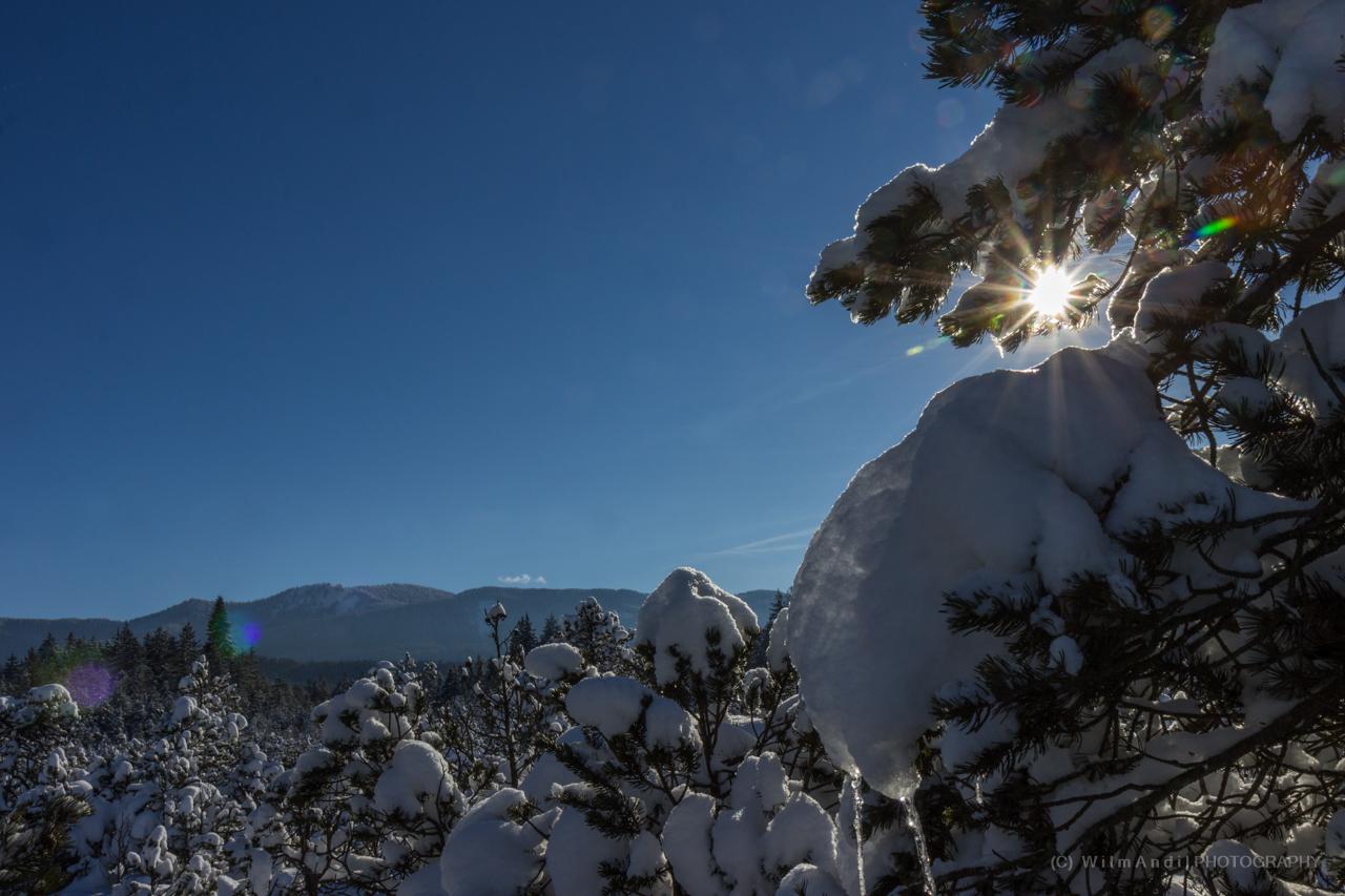 Schneebedeckte Natur