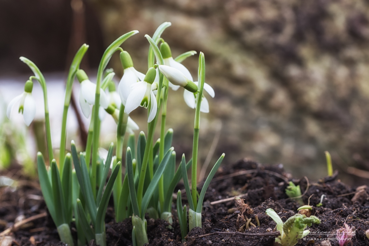 Frühlingserwachen im Garten