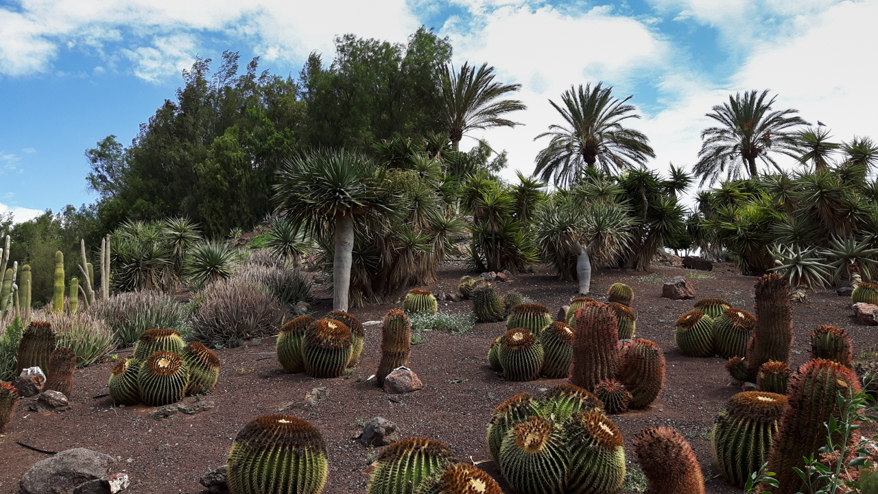 Fuerteventura (1 von 10)