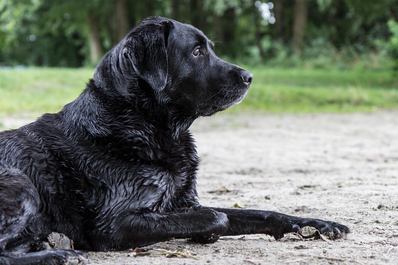 Unbekannter Hund